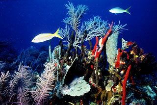 marine ecosystems coral reefs essay