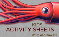 Free Kids Activity Sheets