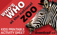 Whos Who at the National Zoo Activity Sheet