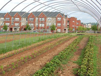 Grown from the Past: A Short History of Community Gardening in the United States